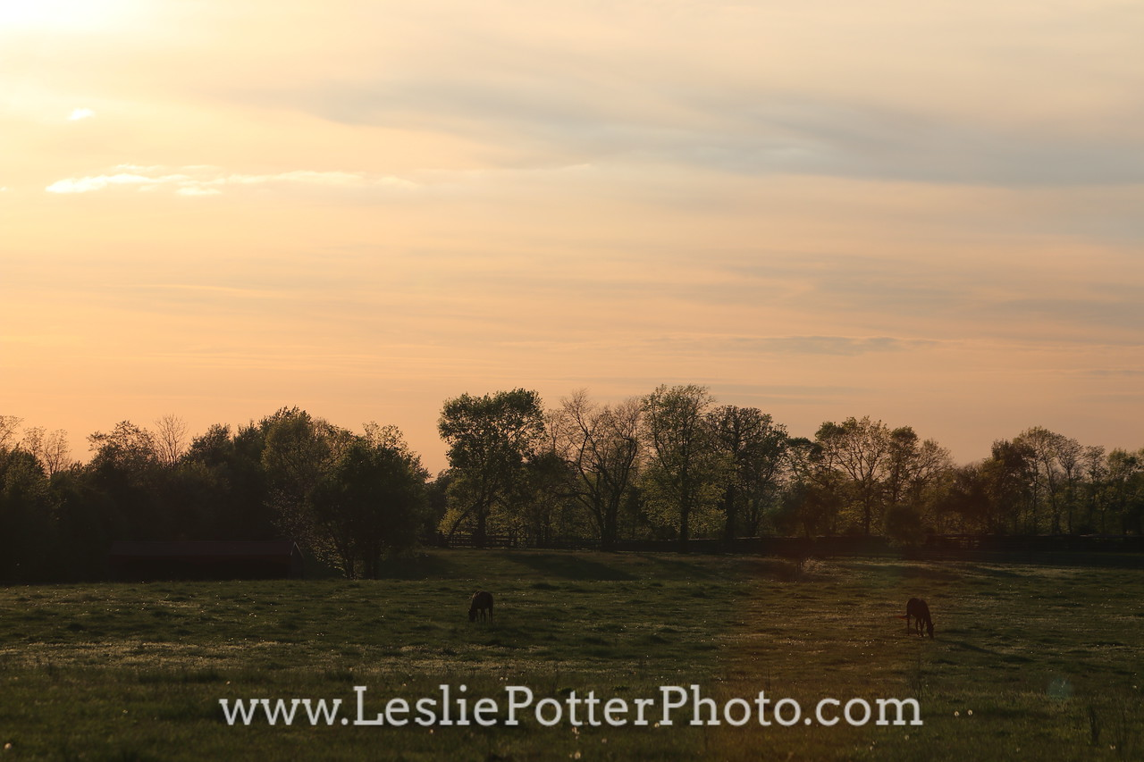 Horse Pasture at Sunset