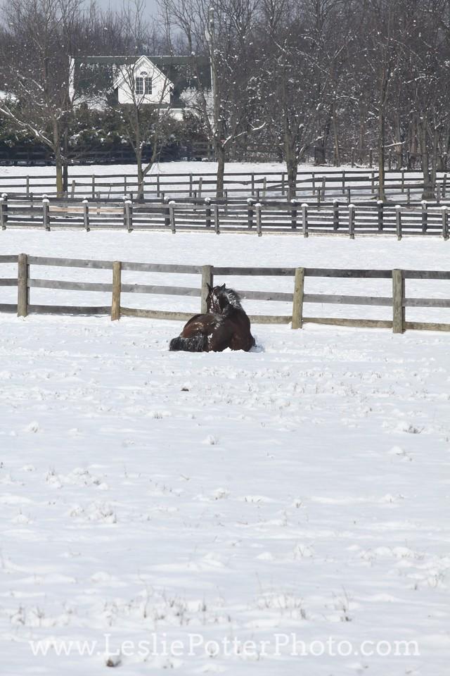 Horse Lying in Snow