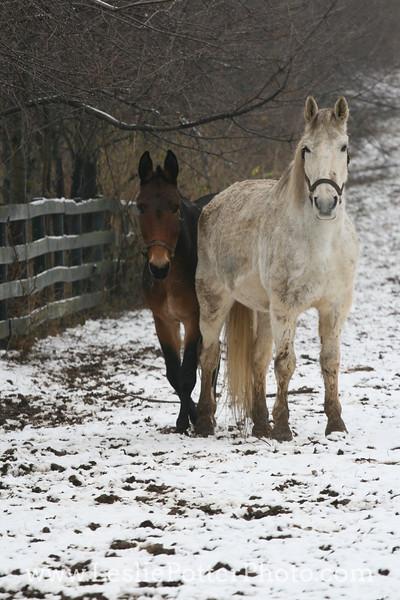 Kentucky Equine Humane Center, Nicholasville, KY. December 2009
