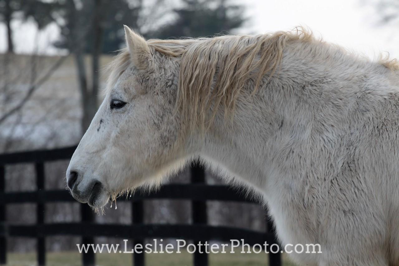 Masterson Station Equestrian Center, Lexington, KY. January 2010