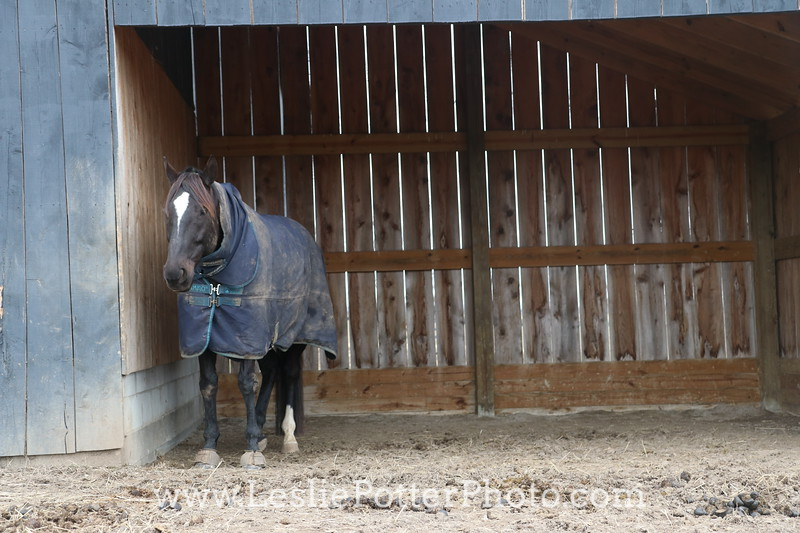 Horse in Shelter
