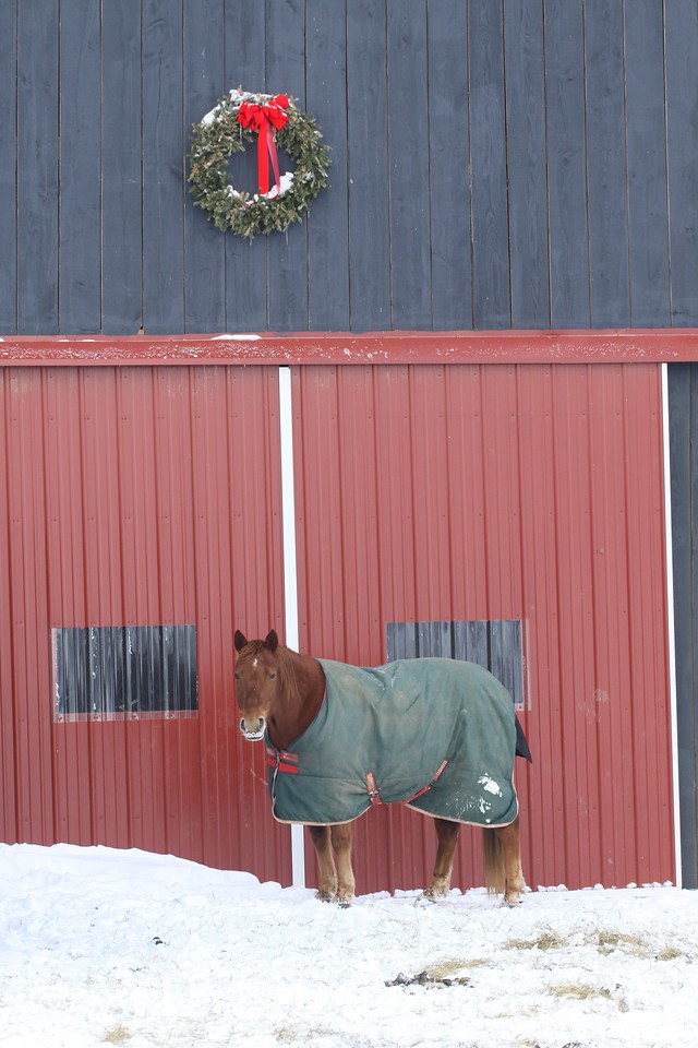 Horse in Blanket in Front of Barn with Christmas Wreath