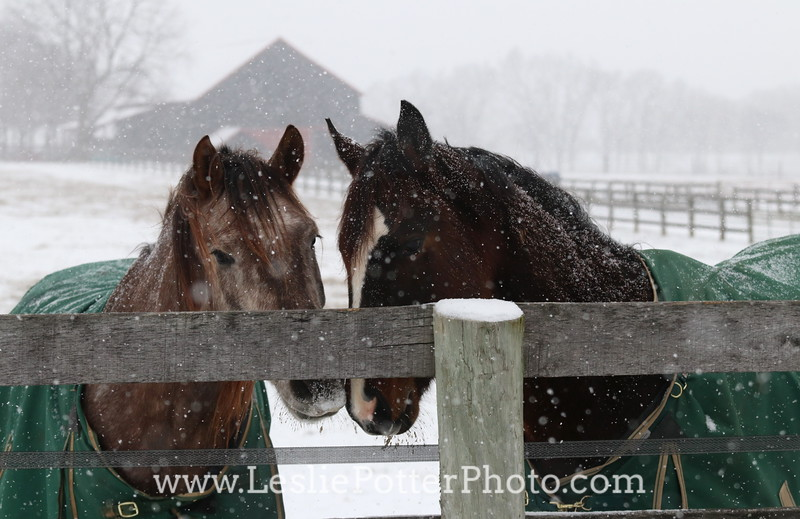 Horses Wearing Green Blankets in the Snow