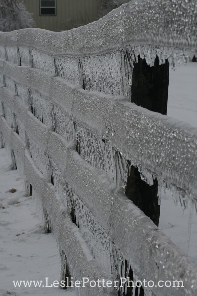 Horse Fencing Encased in Ice