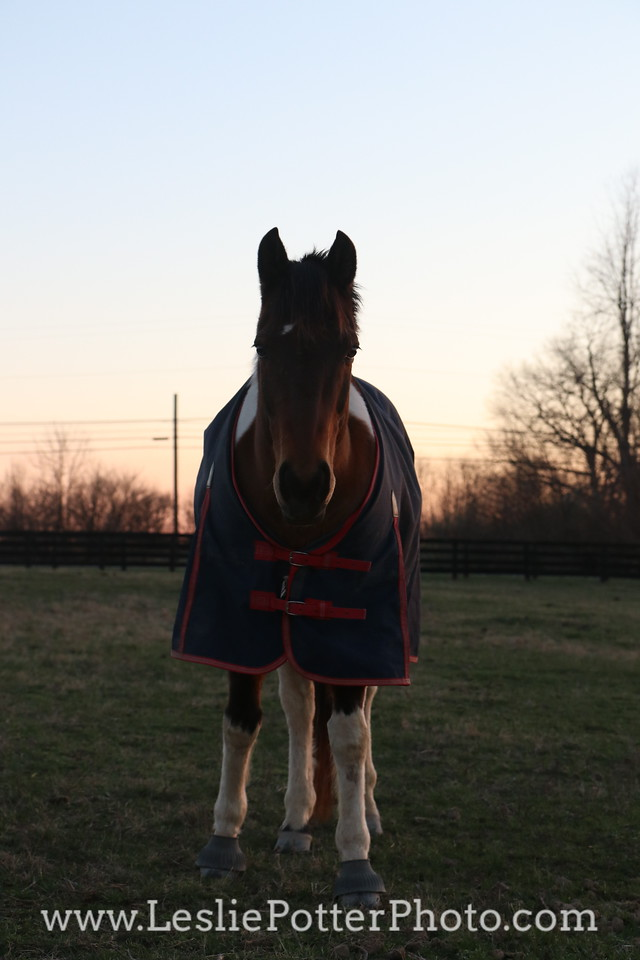 Pinto Horse in a Blanket at Sunset