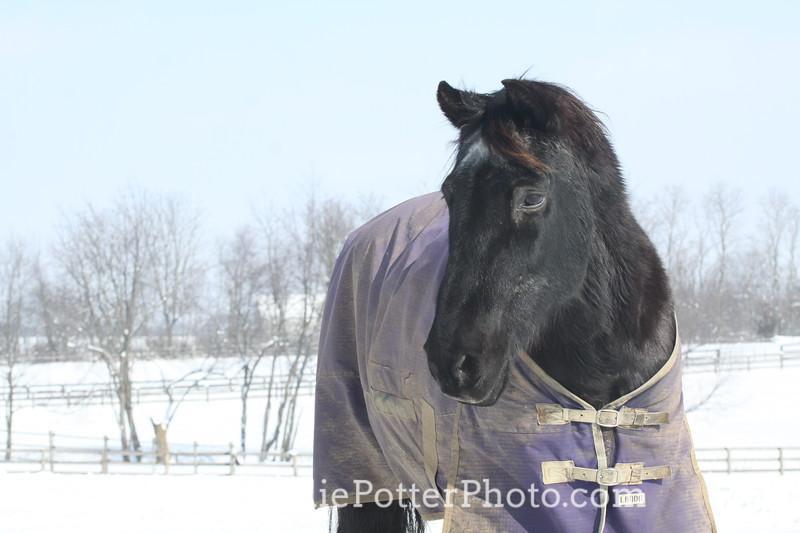 Horse Wearing Blanket in Snow