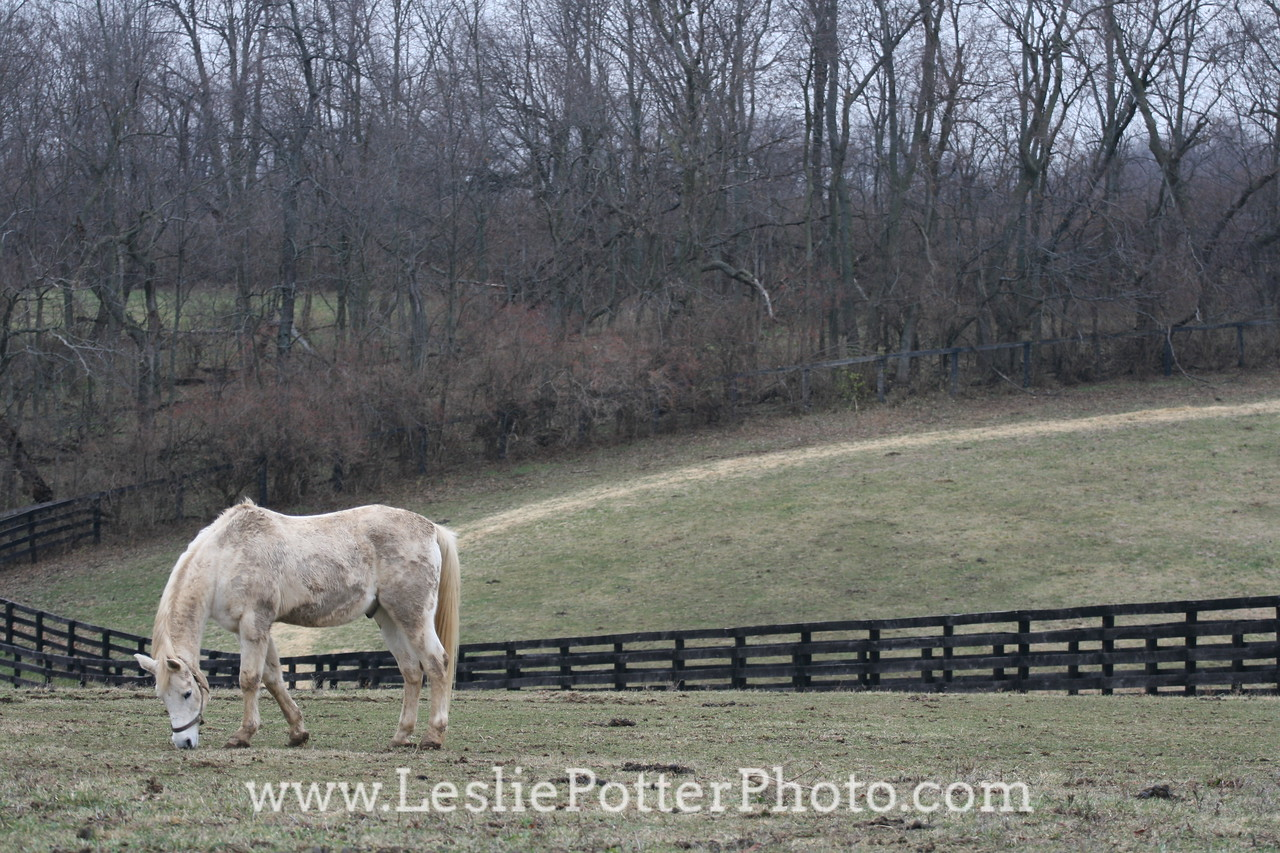 Kentucky Equine Humane Center, Nicholasville, KY. December 2008