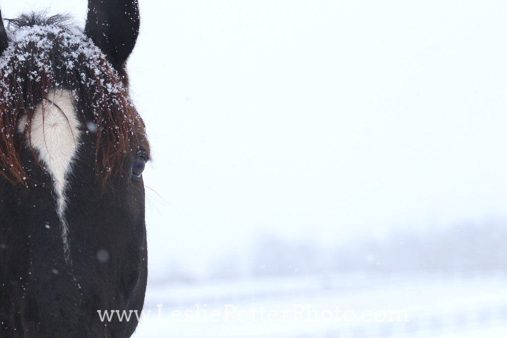 Closeup of a Horse in the Snow