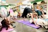 z7 dog yoga