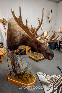 Taxidermy_05©UTM2019