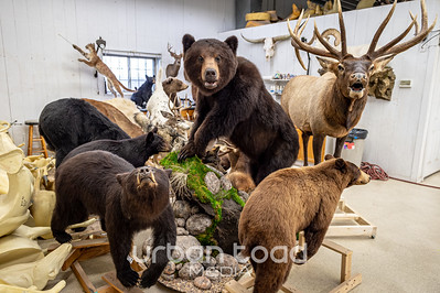 Taxidermy_14©UTM2019