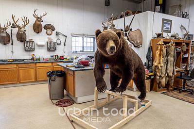 Taxidermy_16©UTM2019
