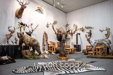 Taxidermy_01©UTM2019