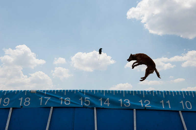 DockDogs Competition, Belvidere, Illinois.  NYTimes, July, 2012