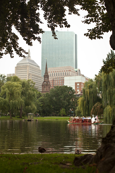 8/25/15 Boston, Mass. -- A swan boat paddles accross the pond in the Boston Public Garden in Boston, Mass. August 24, 2015. Erik Jacobs for the New York Times