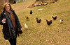 1/17/08 Chilmark, MA -- Jan Buhrman is followed through her yard by her chickens in Chilmark, MA.  Buhrman tries to only eat what is locally produced on Martha's Vineyard, where she lives year-round.  January, 17 2008.  Erik Jacobs for the New York Times