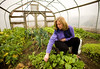 "1/17/08 Chilmark, MA -- Jan Buhrman picks a snack to nibble on in the greenhouse of her friends Mitch Posin and Clarissa Allen in Chilmark, MA.  Surrounding Buhrman is a mix of ""hearty salad greens"" which grow through the winter on the 100-acre Allen Farm.  Buhrman tries to only eat what is locally produced on Martha's Vineyard, where she lives year-round.  January, 17 2008.  Erik Jacobs for the New York Times"