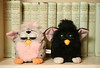 11/2/07 Boston, MA -- Furbies in front of collected works by Freud November 2, 2007.  Erik Jacobs for the New York Times<br /> <br /> 30051870A