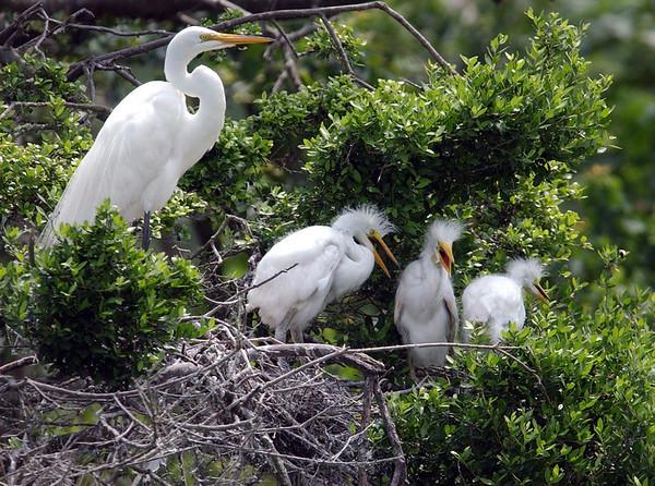 Smith Oaks Bird Sanctuary