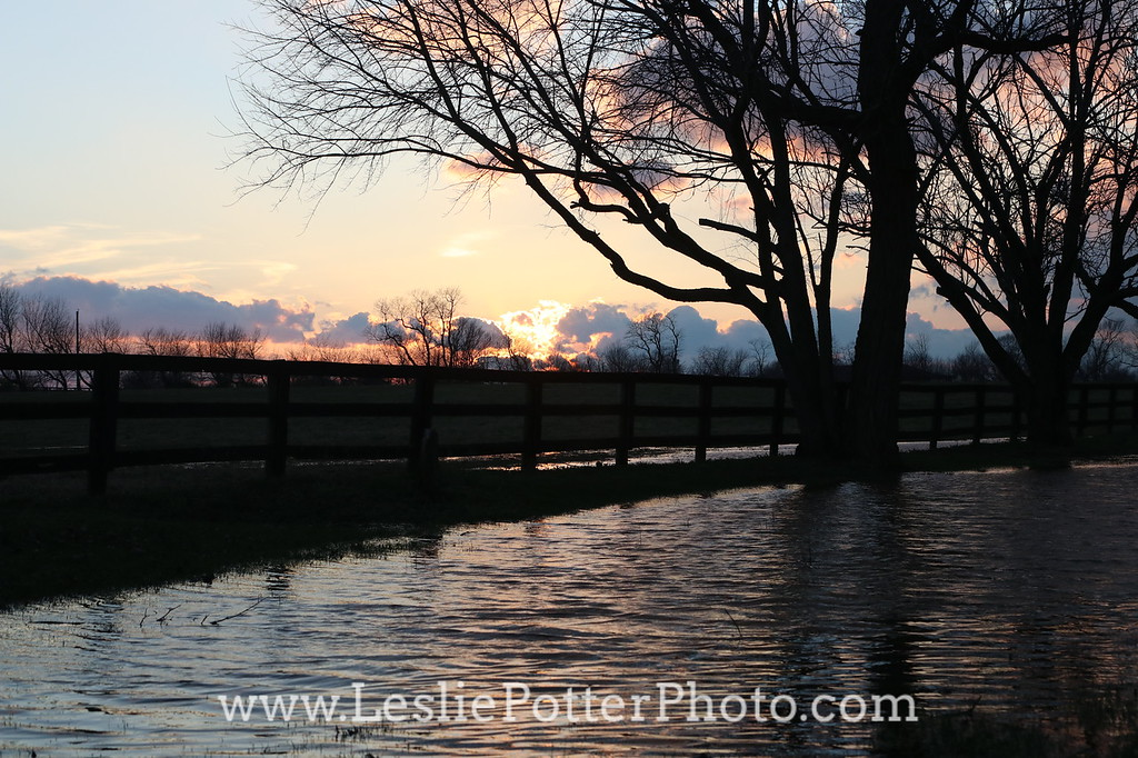 Flooded Horse Pasture at Sunset