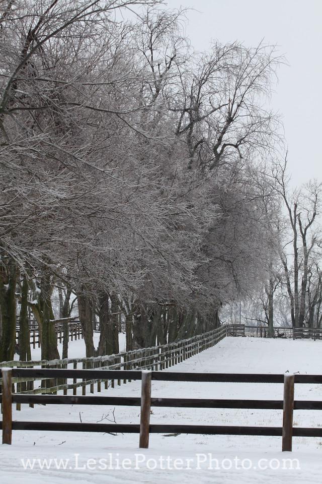 Horse Pasture in Winter