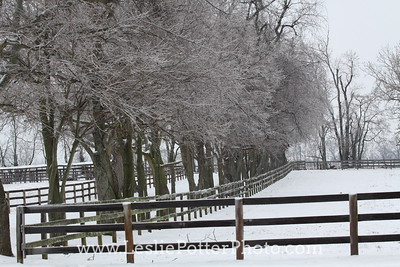 Horse Pasture in Winter