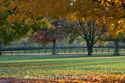 Autumn Horse Farm
