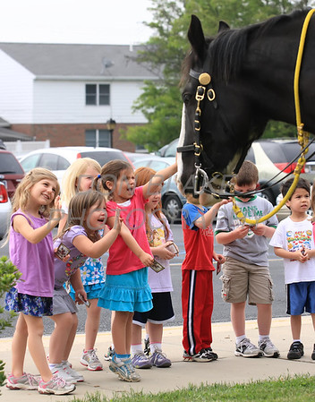 Children from St. John the Beloved School check out the Clydesdales from the New Castle County Police Mounted Patrol ridden by Corp. William Brown (left) and Corp. Rosemarie Williams as members of the military, state, county, and local law enforcement along with emergency personal gathered for the annual Blue Mass at St. John the Beloved Church, Friday, May 4, 2012. photo/ www.DonBlakePhotography.com