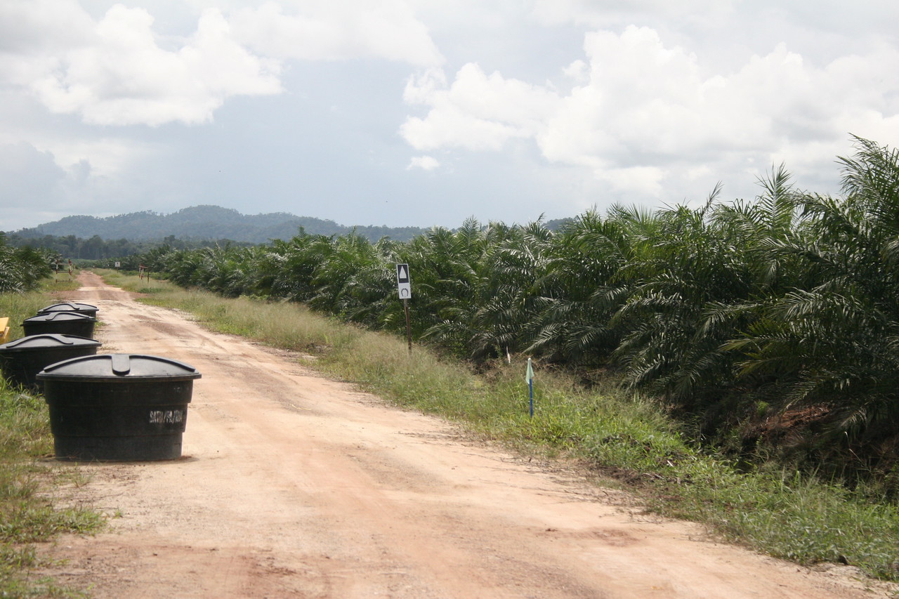 19.  Water stop through palm oil plantation
