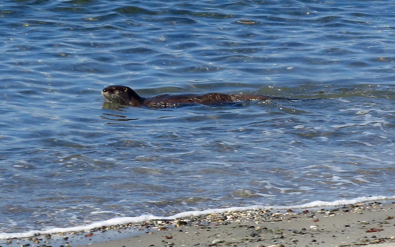 2013-03-23 Otter 004