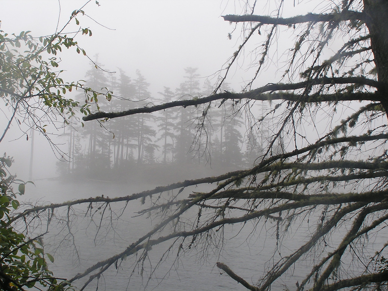 A little island and a lot of fog on Mountain Lake, Moran State Park, Orcas Island.