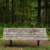 Beautiful forest!  Digital, Trout Pond Recreation Area, West Virginia, Jun 2014.