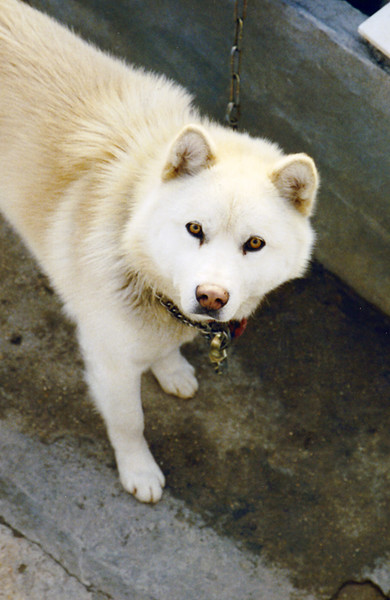 A curious dog in Korea.