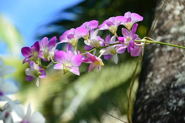 Ed's Caribbean Flower Garden