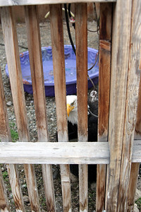 This photo is to show you that she has her own wading pool and how close she was to it, but decided the water dish was better.