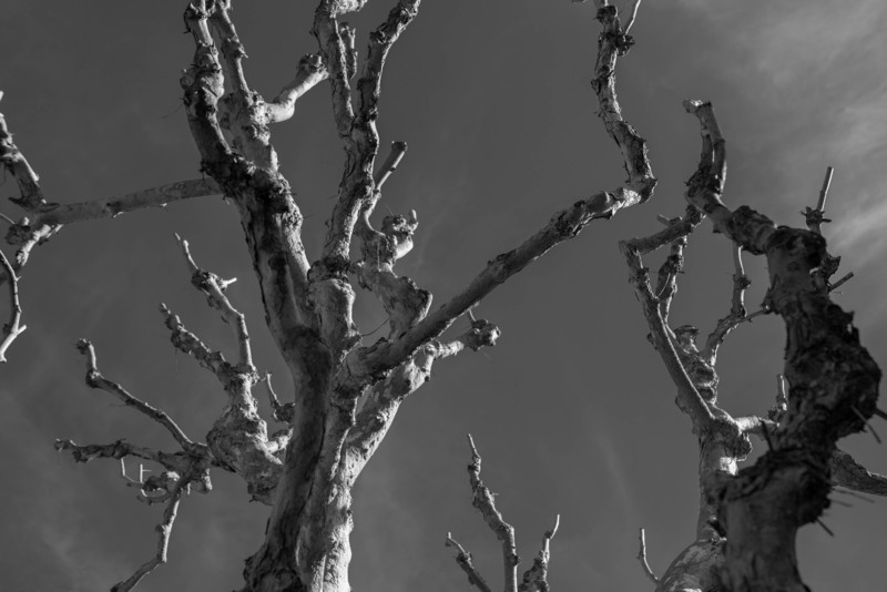 A further study of the images available from Point Lobos.  In this image I am breaking away from the tangential curves and the 8 x 10 format.  I continue to experiment and evolve my photographic eye.<br><br> --- (as if) Edward Weston