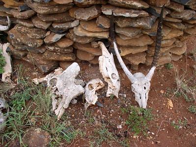 Mpala, Kenya