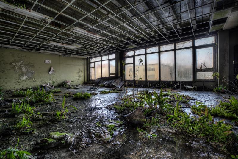 The jungle's classroom