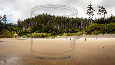 Indian Beach in Ecola State Park, OR. It's just north of Cannon Beach.