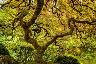 under a moss covered tree (Portland Japanese Garden)