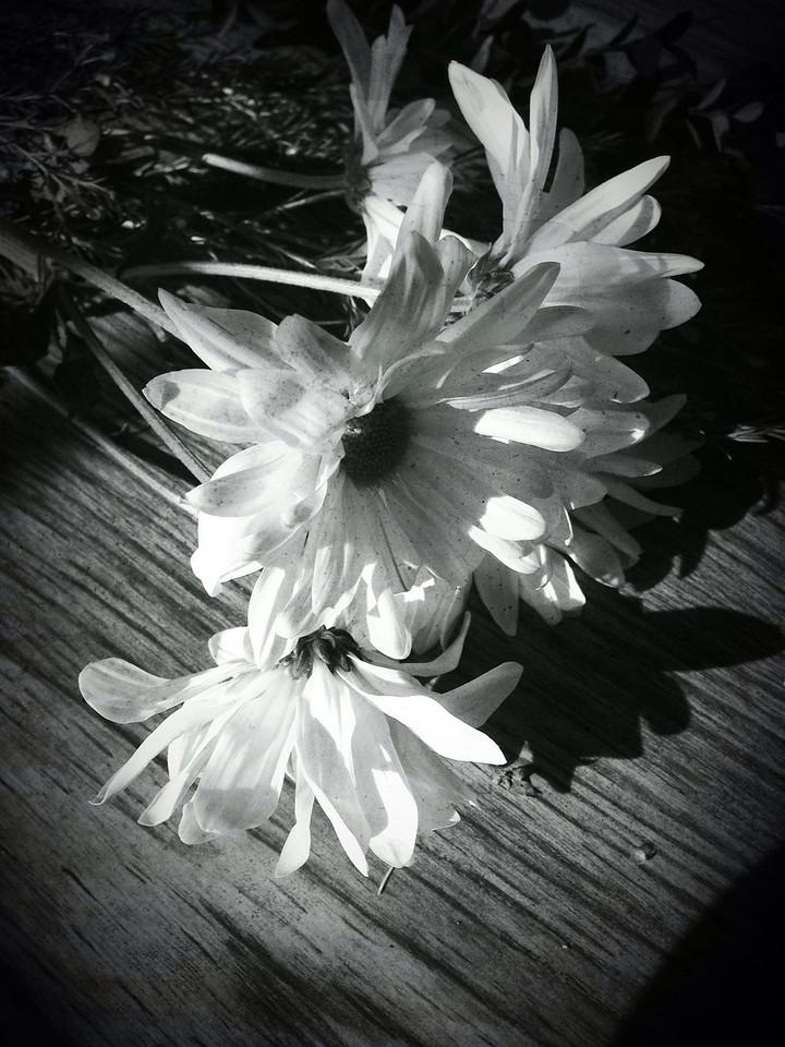 Class Flowers