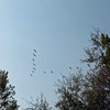 AI 2013 coyote trails 09 081413