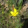 April 3, 2011 Buttercup