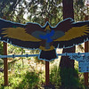 Coyote Trails, Jefferson Nature Center, Medford Oregon.  The visual is great.  Need actual wing span measurements on it too.
