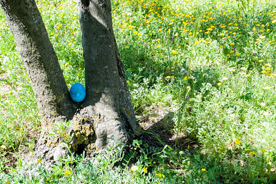 2012 Easter Egg Hunt