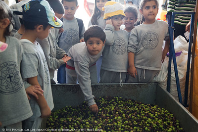 2014 Visit To An Olive Press