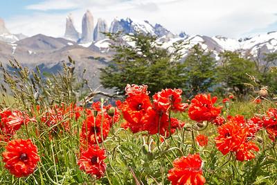 PAT008 Journey Across Patagonia