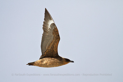 PUQ004 Birding the Magellan Straits