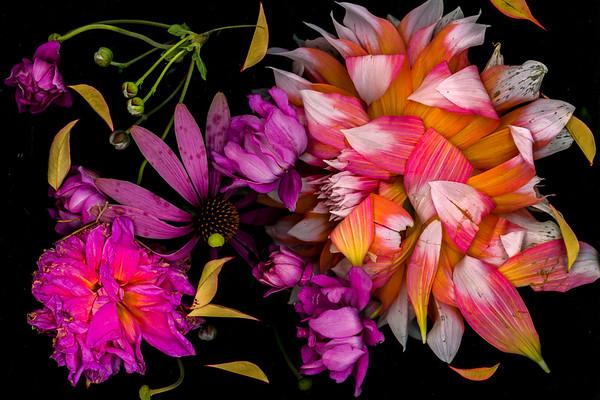 Dahlia and Echinacea