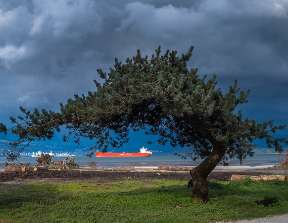 Pine Tree and Freighter